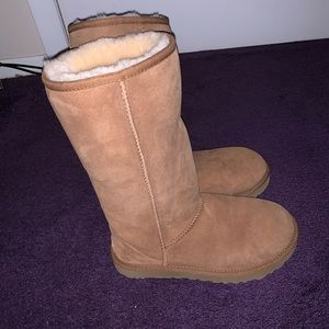 tall chestnut uggs
